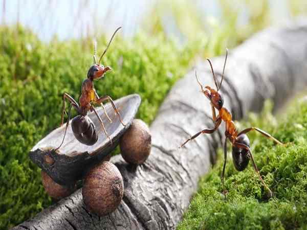 Mơ thấy con kiến