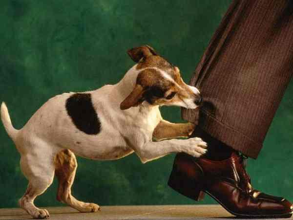 Mơ chó cắn đánh con gì để chắc ăn trúng thưởng?