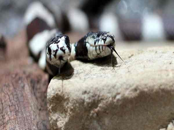 Mơ thấy 2 con rắn