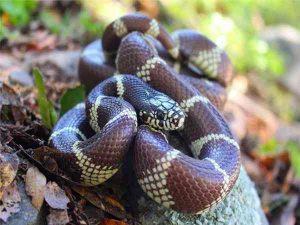 Mơ thấy nhiều rắn