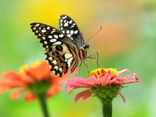 Mơ thấy bướm là điềm gì - Giải mã giấc mơ thấy bướm