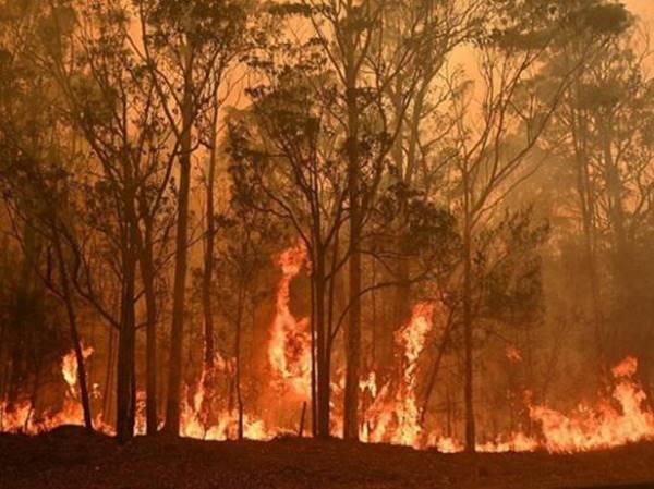 Mơ thấy cháy rừng thử vận may với cặp xổ số nào dễ trúng?